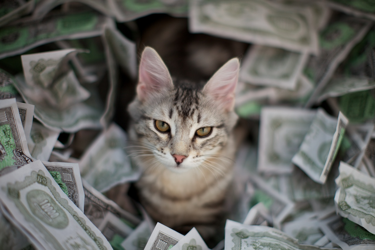 Money-Cat